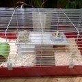 is my guinea pig's cage too small